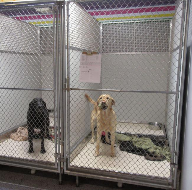 Two happy dogs in boarding kennels