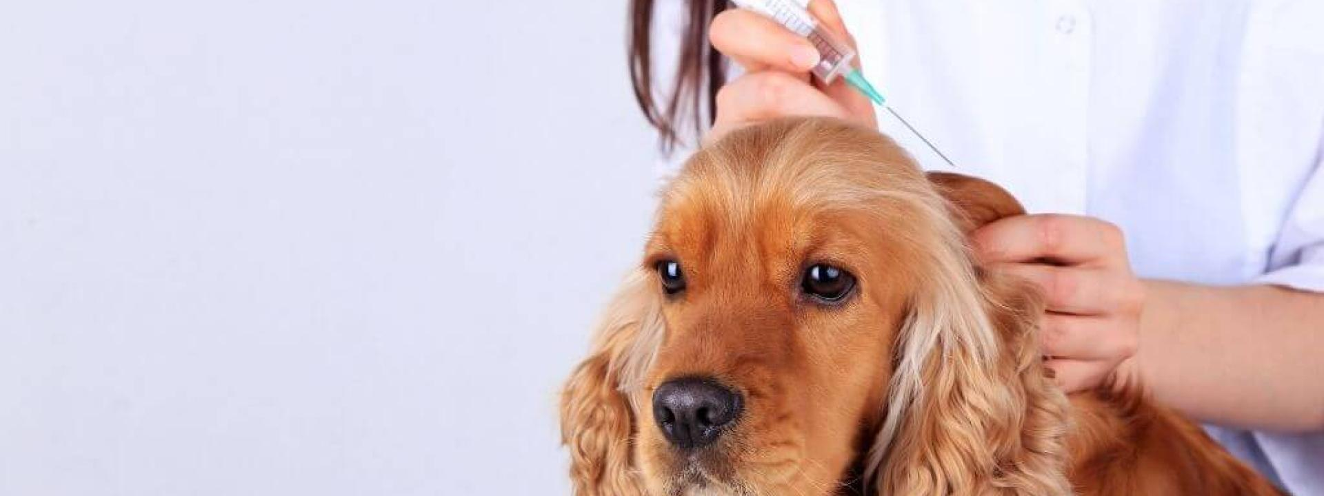 dog vaccination guide